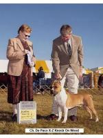 American Staffordshire Terrier, amstaff - Champions, Doc