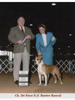 American Staffordshire Terrier, amstaff - Champions, Buster