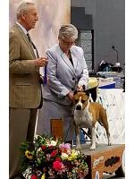 American Staffordshire Terrier, amstaff - Champions, Flora