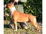 AMSTAFF Speed (Ataxia Clear)
