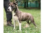 AMSTAFF Mg (Ataxia Clear)