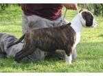 AMSTAFF Miami (ataxia Clear by Parental)