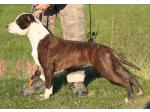AMSTAFF Gioia(Ataxia Clear By Parental)